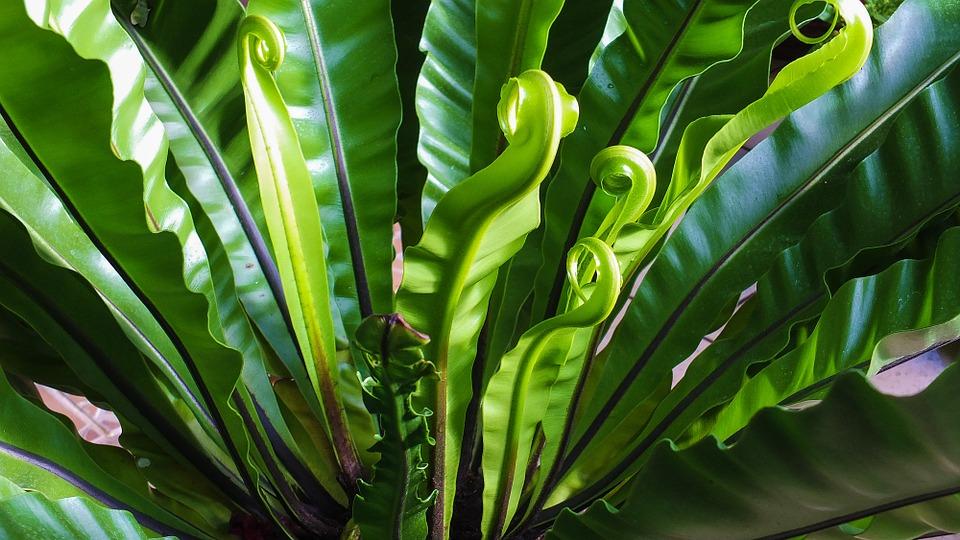 Ornez vos murs extérieurs de plantes