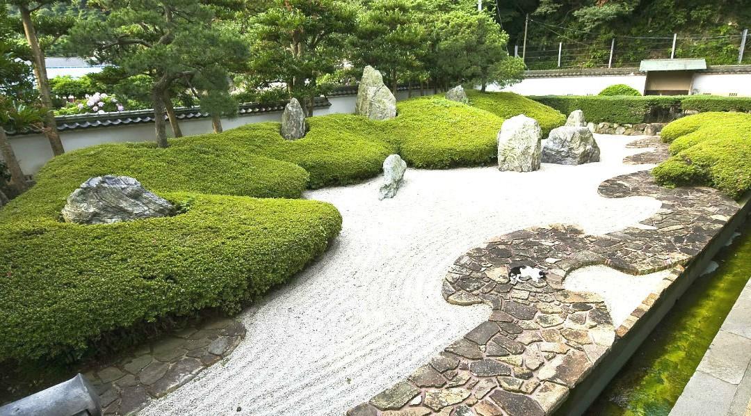 Conseils et astuces botaniques pour un jardin minéral réussi