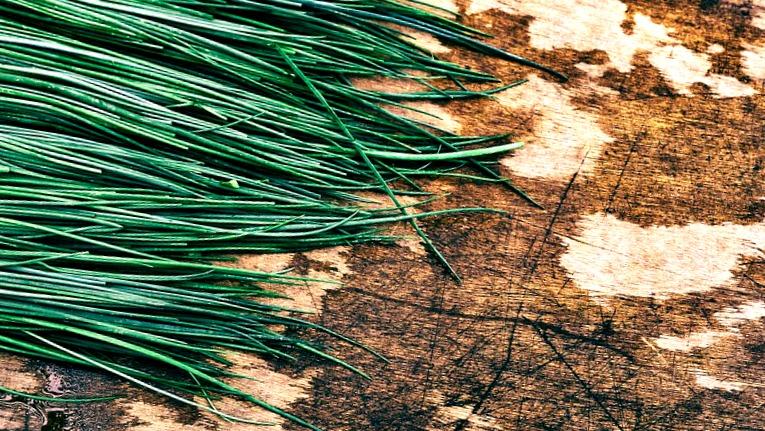Un mini potager chez vous pour cultiver vos propres herbes aromatiques