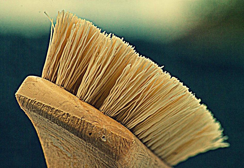 3 conseils d'hygiène pour bien nettoyer sa maison